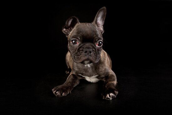 Puppy with no name by Mark Cooper