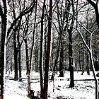 Snow Covered Woodland Essex by liberthine01