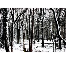 Snow Covered Woodland Essex Photographic Print