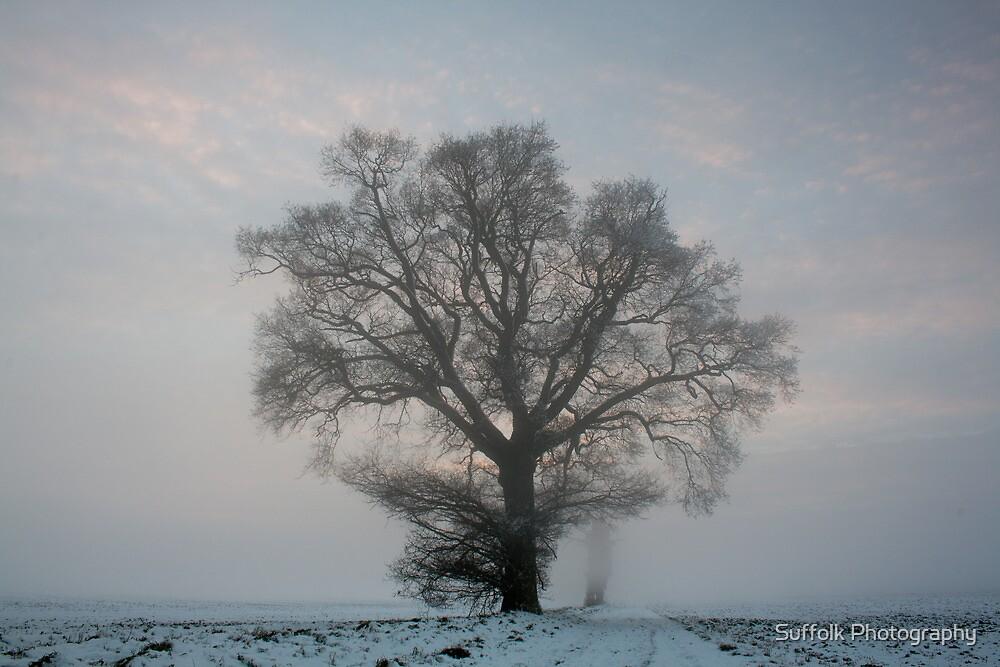 Tree & Freezing Fog,Bury St Edmunds,Suffolk by Suffolk Photography