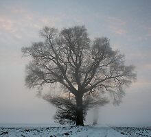 Tree & Freezing Fog,Bury St Edmunds,Suffolk by Suffolk Photography