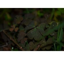 Clover... Photographic Print