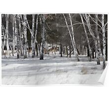 Winter Whitetail and Birch Poster