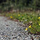 A Beautiful Trail by yakkphat