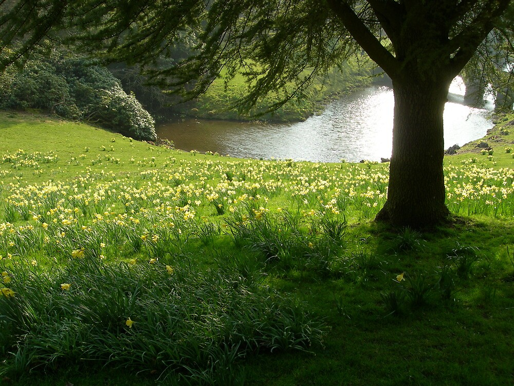 Daffodils at Stourhead by simontait