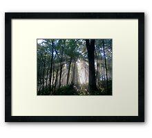A Guiding Light Framed Print