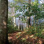 A Walk thru the Woods by msbpackengineer