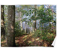 A Walk thru the Woods Poster