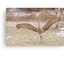 Big Showoff ~ Canvas Print