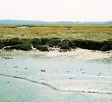 Plum Island, April 2012 by jenjohnson1968