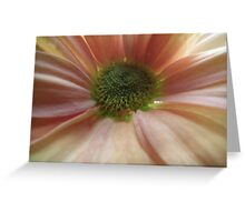 Flower Pink/White and Green  Greeting Card