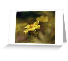 Golden Highlights Greeting Card