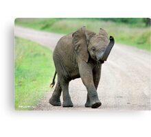 THE AFRICAN ELEPHANT – Loxodonta Africana - AFRIKA OLIFANT Canvas Print