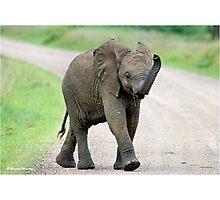 THE AFRICAN ELEPHANT – Loxodonta Africana - AFRIKA OLIFANT Photographic Print