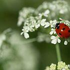 Ladybug & Hemlock by Susan R. Wacker
