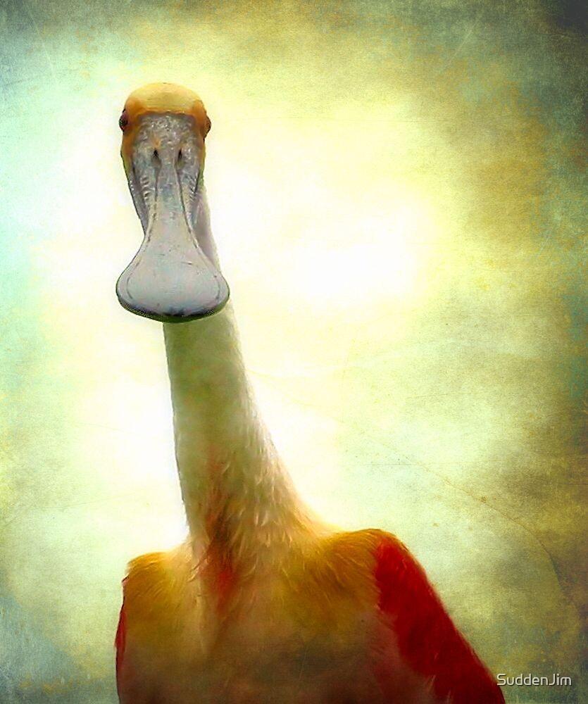 I Am Not A Duck! by SuddenJim