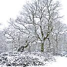 Woods in the Snow by Sarah Walters