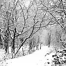 Snowy Woodland Path by Sarah Walters