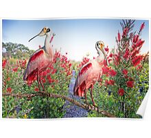 Roseate Spoonbills in Bottlebrush Poster