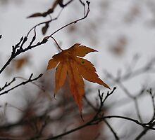 Autumn Leaf by AbbieeHarveyy