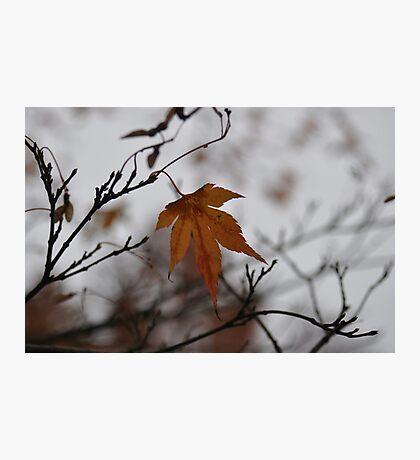 Autumn Leaf Photographic Print