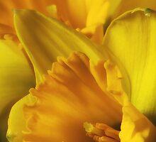 Pocketful of Sunshine by TeresaB