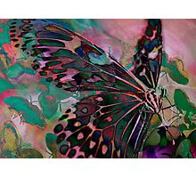 Digital: Butterflies Photographic Print