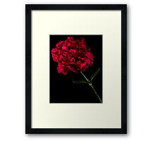 Flower 3 Framed Print