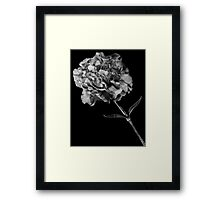Flower 4 Framed Print