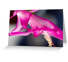 Christmas Cactus Flower Greeting Card