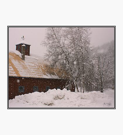 Barn and Birch in Snowstorm Photographic Print