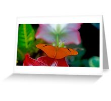 The Butterfly & The Hibiscus Greeting Card