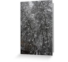 Grey Birch Details in a Snowstorm Greeting Card
