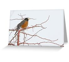 American Female Robin Greeting Card