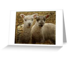 Inquisitive Pair Greeting Card