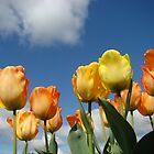 Orange Tulip Flowers art prints Spring Tulips by BasleeArtPrints