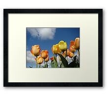 Orange Tulip Flowers art prints Spring Tulips Framed Print