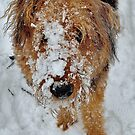 SPRING SNOW by melek0197