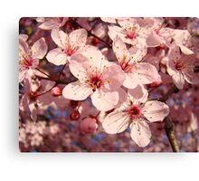 Spring Tree Blossoms Pink art prints Floral Canvas Print