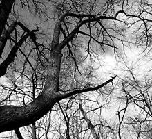 Cool Tree Black and White by marybedy