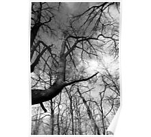 Cool Tree Black and White Poster