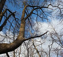 Cool Tree by marybedy