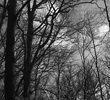 Spring Trees 19 Black and White by marybedy