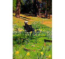 Spring Contemplation Photographic Print