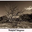 Wakefield Mangroves by Paul Thompson