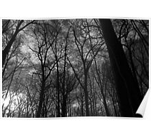 Tall Trees in Spring 18 Black and White Poster