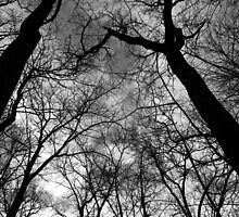 Looking Up Black and White by marybedy