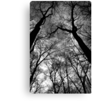 Looking Up Black and White Canvas Print