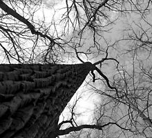 Tall Tree Black and White by marybedy