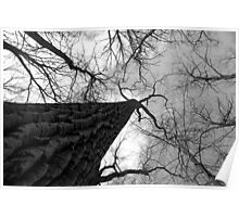 Tall Tree Black and White Poster